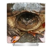 Turtle In Repose  Shower Curtain