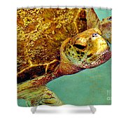 Turtle Life Shower Curtain