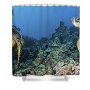Turtle Panorama Shower Curtain by Dave Fleetham - Printscapes