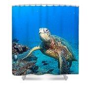 Turtle Portrait Shower Curtain