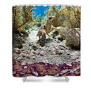 Turtle Red Carpet Shower Curtain