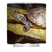 Turtle Reflections Shower Curtain by Deleas Kilgore