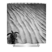 Turtle Ridge Shower Curtain by Sean Davey