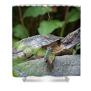 Turtle Rock Shower Curtain