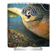 Turtle Run Shower Curtain