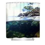 Turtle Tide Shower Curtain