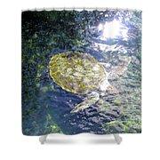 Turtle Water Glide Shower Curtain