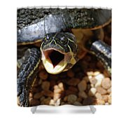 Turtle With His Mouth Wide Open  Shower Curtain