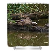 Turtles And A Duck Shower Curtain