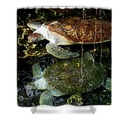 Turtles Shower Curtain