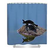 Turtles Tanning Shower Curtain