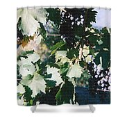 Tuscan Grapes Photograph Shower Curtain