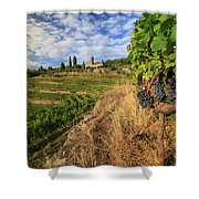 Tuscan Vineyard And Grapes Shower Curtain