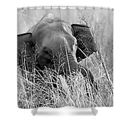 Tusker In The Grass Shower Curtain