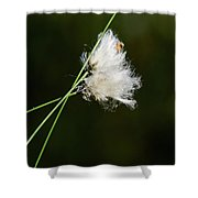 Tussock Cottongrass Shower Curtain