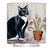 Tuxedo Cat Sitting By The Pink Tulips  Shower Curtain