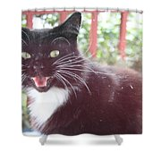 Can You Hear Me Meow? Shower Curtain