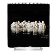 Twelve White Pelicans On A Dark Background. Shower Curtain
