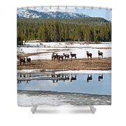 Twice The Elk Shower Curtain
