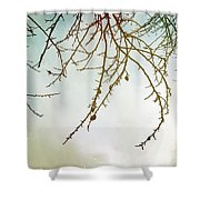 Twigs And Winter Sky Two Shower Curtain