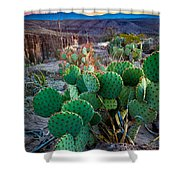 Twilight Prickly Pear Shower Curtain