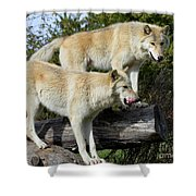 Twin Blond Wolves Shower Curtain