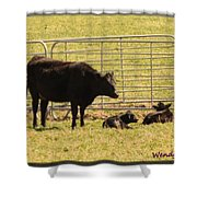 Twin Calves Shower Curtain