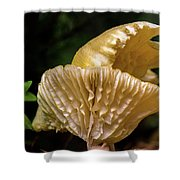 Twin Cantharellus Shower Curtain