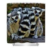 Twin Lemurs Shower Curtain