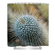 Twin Spined Cactus Shower Curtain