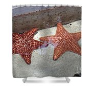 Twin Stars Shower Curtain