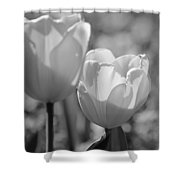 Twin Tulips B/w Shower Curtain