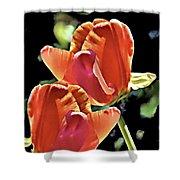 Twin Tulips Shower Curtain
