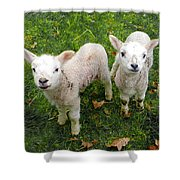 Twins - Spring Lambs Shower Curtain