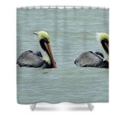 Twins Brown Pelican In Gulf Of Mexico Shower Curtain