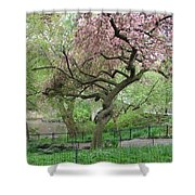 Twisted Cherry Tree In Central Park Shower Curtain