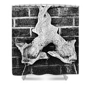 Twisted Fish - Bw Shower Curtain