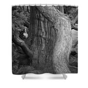 Twisted Old Tree Shower Curtain