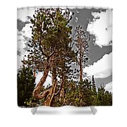 Twisted Pines Shower Curtain