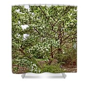 Twisted Privet Shower Curtain