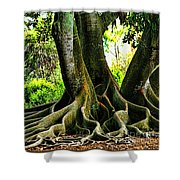 Twisted Shower Curtain by Tom Prendergast