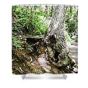 Twisted Tree Smoky Mountains Shower Curtain