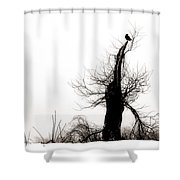 Twisted Tree With Snow Crow Shower Curtain