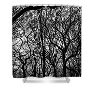 Twisted Trees Shower Curtain