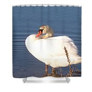 Twisted  White Swan Shower Curtain