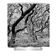 Twisted Woodland Shower Curtain