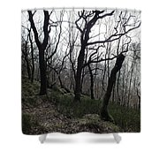 Twisted Woods Shower Curtain
