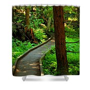 Twisting Path Through The Woods Shower Curtain