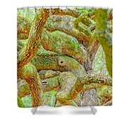 Twists In Time Shower Curtain