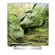 Two Alligators Shower Curtain